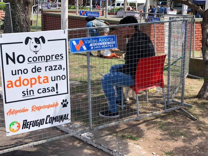 ALCORTA. Primera jornada de adopcion responsable de mascotas en Alcorta